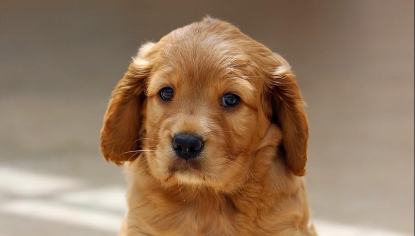 Crop puppy